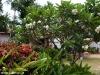 Bow Thong Resort 38