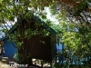 Orchid Bungalows 01