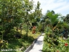 Orchid Bungalows 09