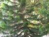 sensi-paradise020 Koh Tao